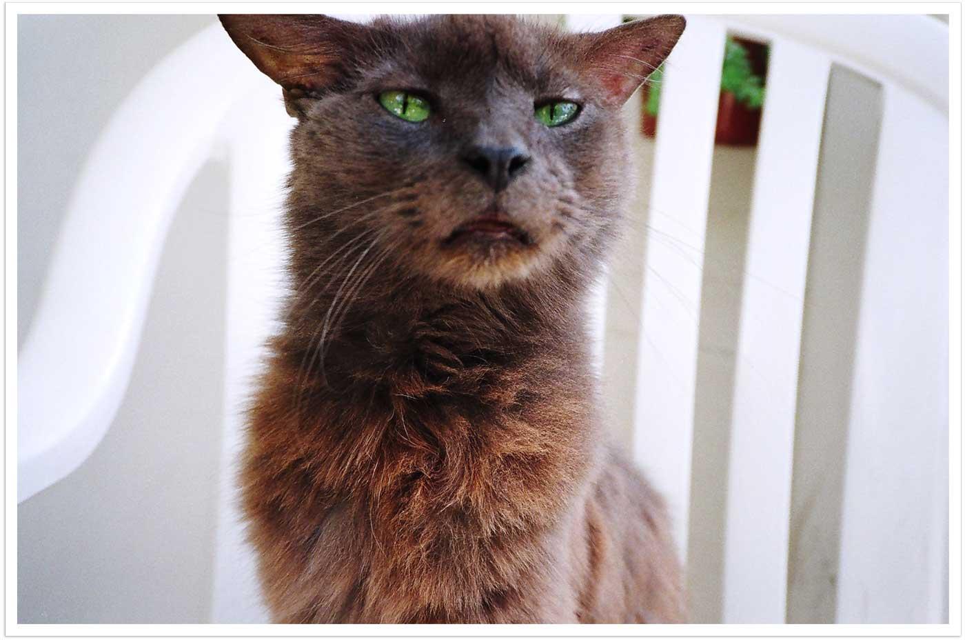 Earl the Cat